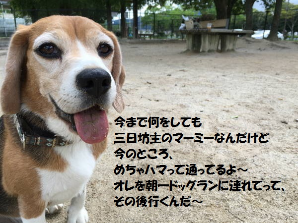 もじIMG_2024.jpg
