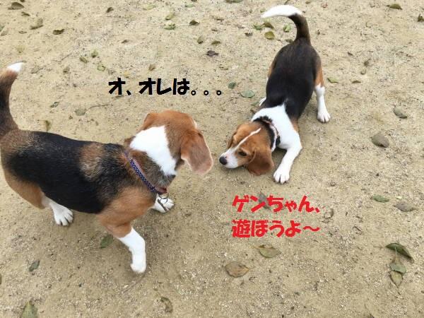 IMG_1144もじ.jpg