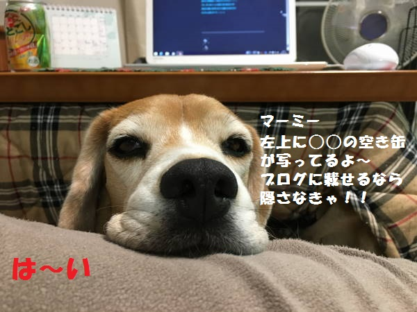 IMG_2540もじ.jpg